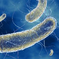 Причины и симптомы эшерихиоза