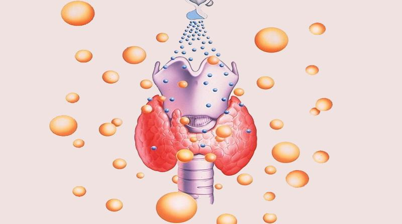 Зачем щитовидная железа вырабатывает гормоны?