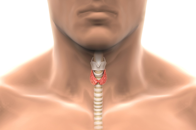 Степени увеличения щитовидной железы