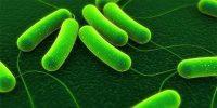22377 Причины, формы и симптомы хеликобактера пилори