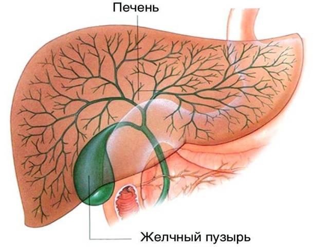 Список желчегонных препаратов при застое желчи